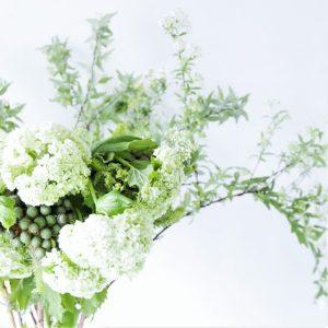 グリーン植物